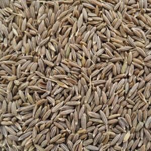 Купить семена тмина обыкновенного